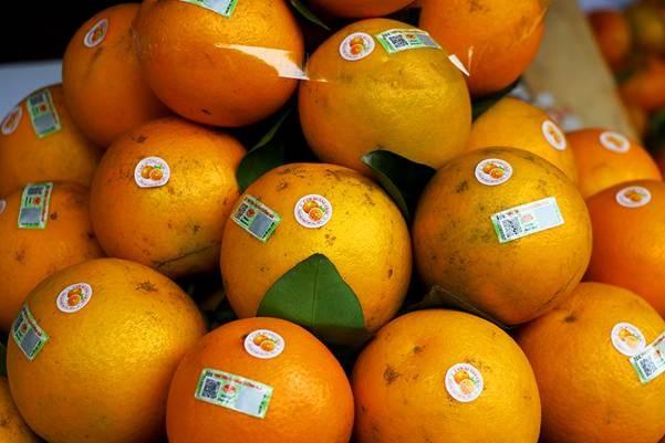Naranja, producto estratégico de la provincia norteña de Hung Yen - ảnh 1
