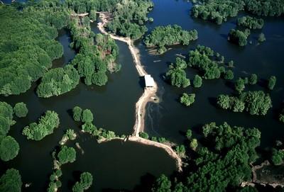 越南湿地约为1200万公顷 - ảnh 1