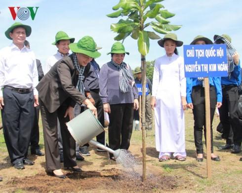 植树就是投资生活的未来 - ảnh 1