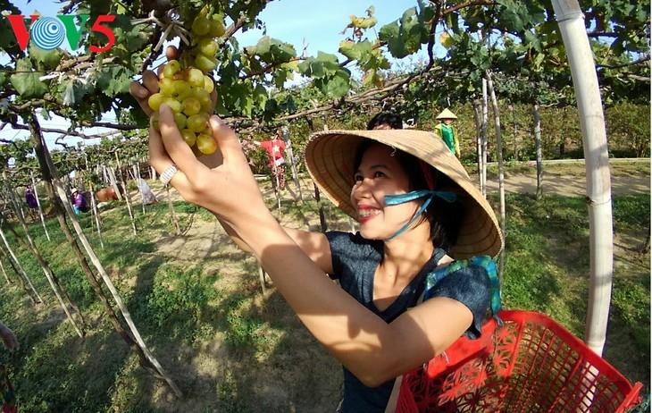 越南旅游景点接待众多春游游客 - ảnh 1