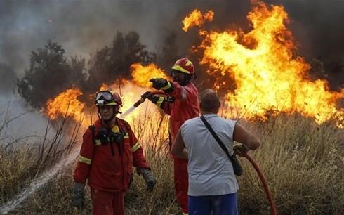 希腊森林火灾遇难人数升至74人 全国哀悼3天 - ảnh 1