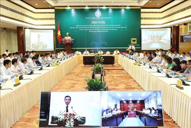 越南政府有关合作社发展政策的视频会议举行 - ảnh 1