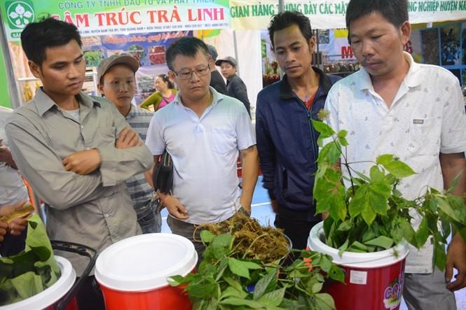 Ouverture de la première foire de gingseng Ngoc Linh de Quang Nam - ảnh 1