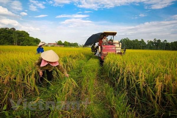Economie verte pour le développement durable et l'adaptation au changement climatique - ảnh 1
