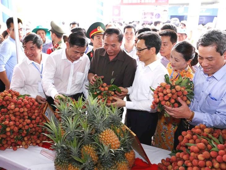 Ouverture de la fête des litchis de Thanh Hà 2018 - ảnh 1