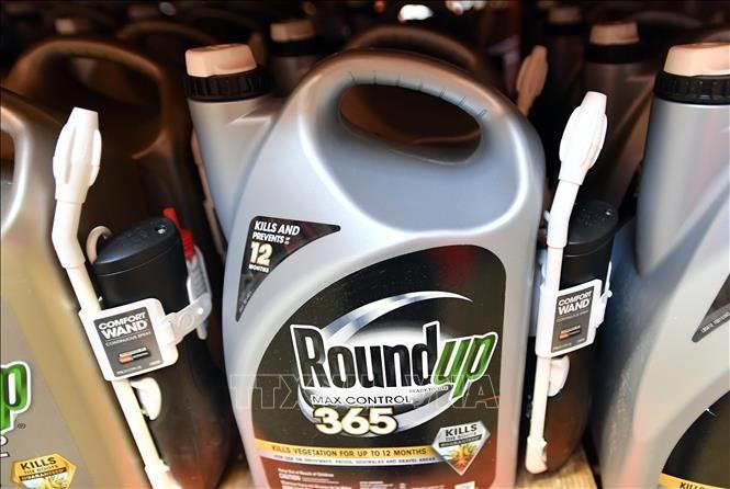 RoundUp et cancer : Monsanto condamné à payer 80 millions de dollars à un plaignant  - ảnh 1