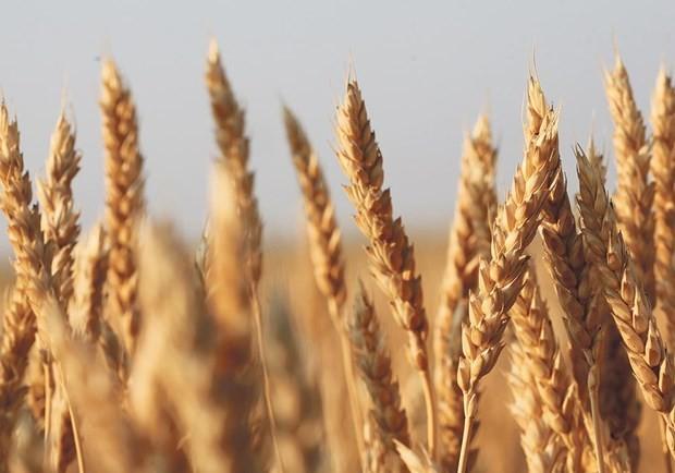 Céréales: l'OMC donne raison aux États-Unis contre la Chine - ảnh 1