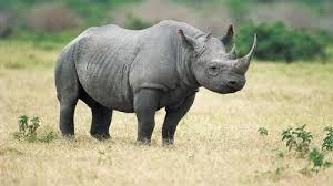 Compréhension orale: leçon 8: protéger des animaux sauvages au Vietnam - ảnh 1