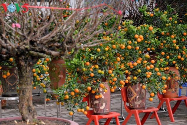 Hanoi à l'approche du Têt - ảnh 5