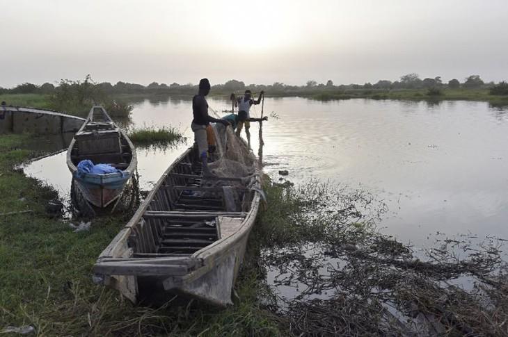 Boko Haram kill 31 fishermen in Nigeria - ảnh 1