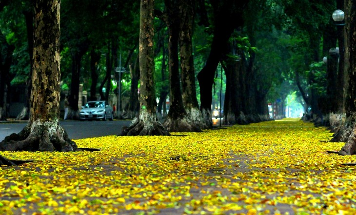 Autumn in Hanoi - ảnh 5