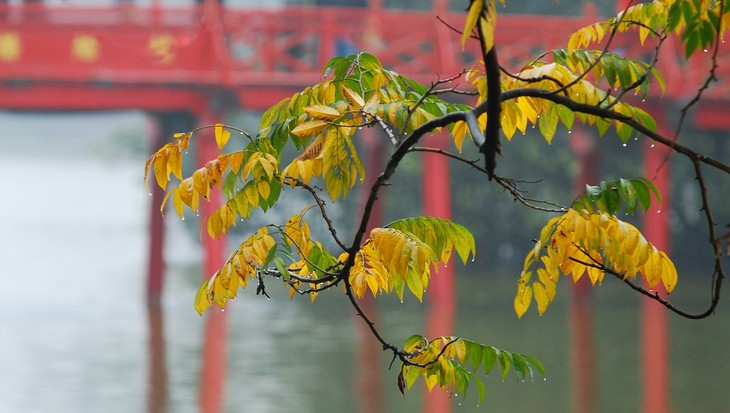 Autumn in Hanoi - ảnh 16