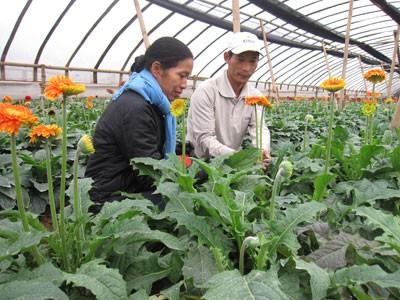 Die Neuorganisation der Ackerflächen in Gemeinden rund um Hanoi  - ảnh 1