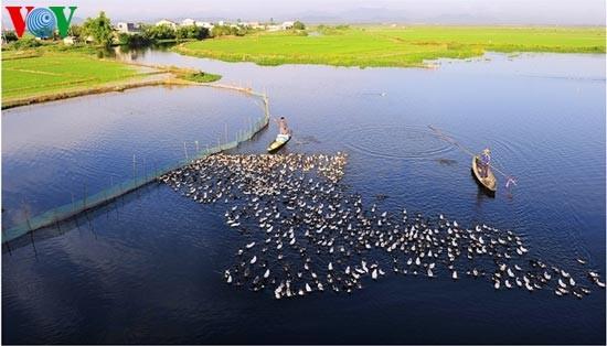 Die romantische Landschaft der Tam Giang Lagune - ảnh 1