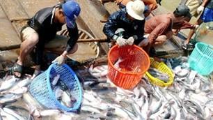 Zucht von Meeresfrüchten und Produkten aus Aquakulturen in Vietnam - ảnh 1