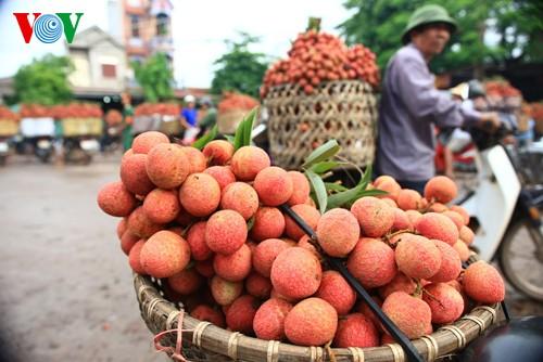Investition zur Erhöhung des Exportvolumens von Gemüse und Früchten - ảnh 1