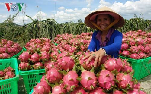 Investition zur Erhöhung des Exportvolumens von Gemüse und Früchten - ảnh 2
