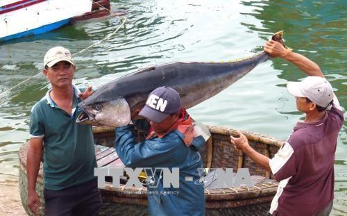 Bemühungen Vietnams zur Aufhebung der gelben Karte der EC gegen Produkte der Aquakultur - ảnh 1