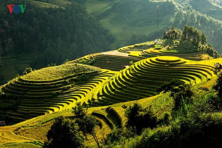 Das 3. Reis-Festival unterstützt Bauern mit Saatgut - ảnh 1
