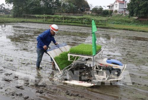 Fröhliche Stimmung bei der landwirtschaftlichen Produktion im neuen Jahr - ảnh 1