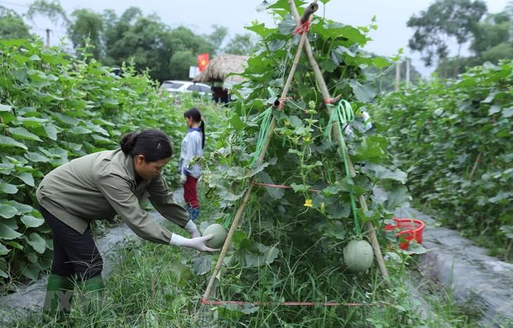 Fast zwei Milliarden US-Dollar von Entwicklungshilfe für Landwirtschaft in den vergangenen 20 Jahren - ảnh 1