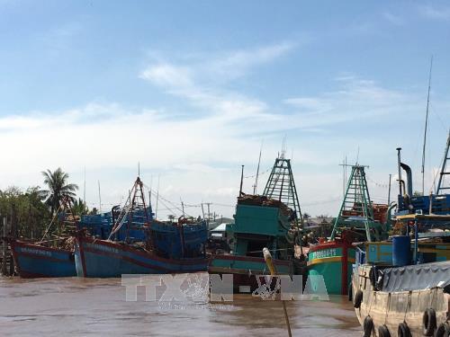Во Вьетнаме предприняты экстренные меры по противодействию тайфуну «Тембин» - ảnh 1