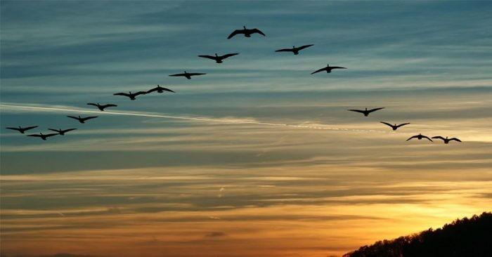 Программа «Добро пожаловать,  перелетные птицы» подчеркивает важность охраны данных видов птиц - ảnh 1