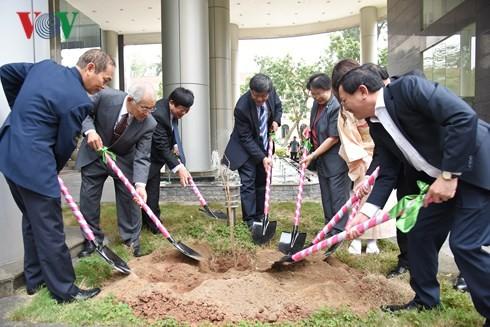 VOV menerima 100 pohon sakura pemberian oleh Sekolah bahasa JepangKairinjuku - ảnh 1