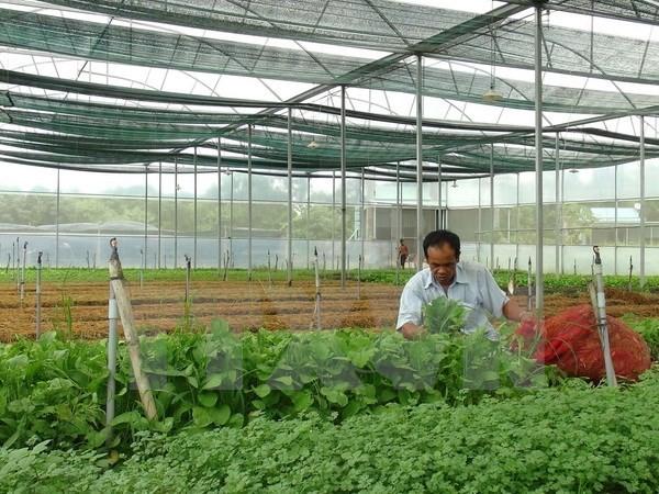 Vietnam mengarah ke pertanian yang bersih dengan teknologi nano - ảnh 1