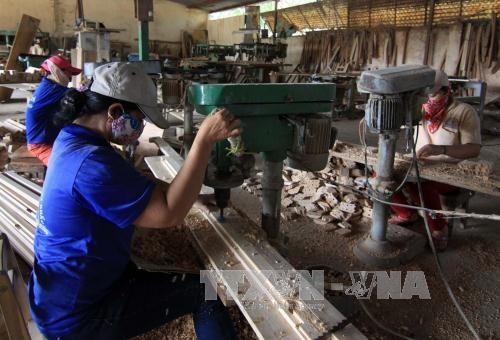 Konferensi tentang solusi mengembangkan cabang industri pengolahan kayu dan hasil kehutanan - ảnh 1