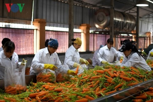 Mendorong konektivitas: anak kunci dari pertumbuhan ekspor hasil pertanian - ảnh 1