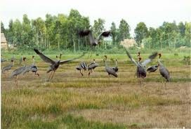 Tram Chim-Nationalpark wird internationales Biosphärenreservat - ảnh 1