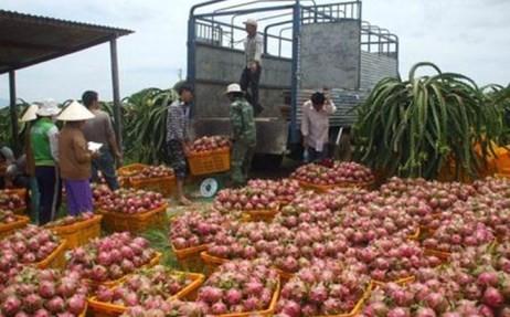 Vietnam will verstärkt landwirtschaftliche Produkte exportieren - ảnh 1