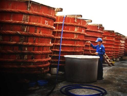 Fischsoße aus Phu Quoc - ảnh 1