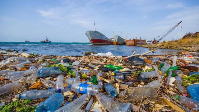 Untätig werden die Ozeane mehr Abfall als Fische enthalten - ảnh 1