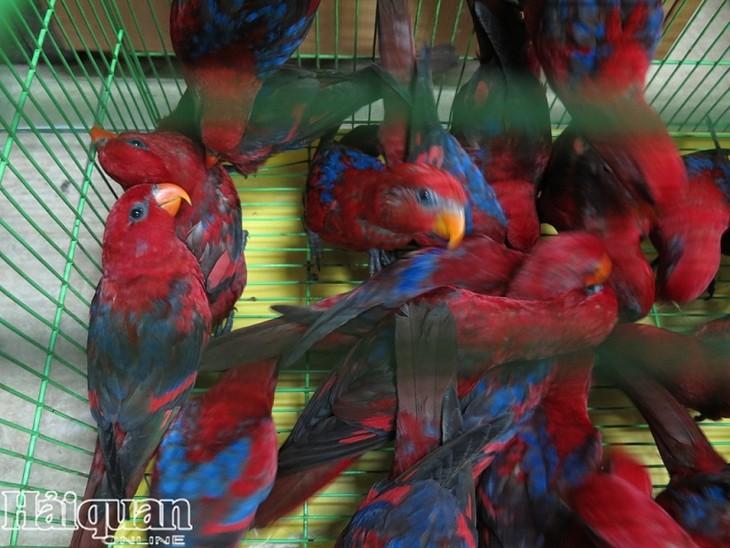 불법 수입된 300여 마리 붉은로리앵무새, 산림보호국으로 운송 - ảnh 1