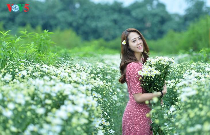 រដូវផ្កាគ្រីសាន (Chrysanthemum) Hoa mi (ហាកមី) រីកនៅទីក្រុងហាណូយ - ảnh 10