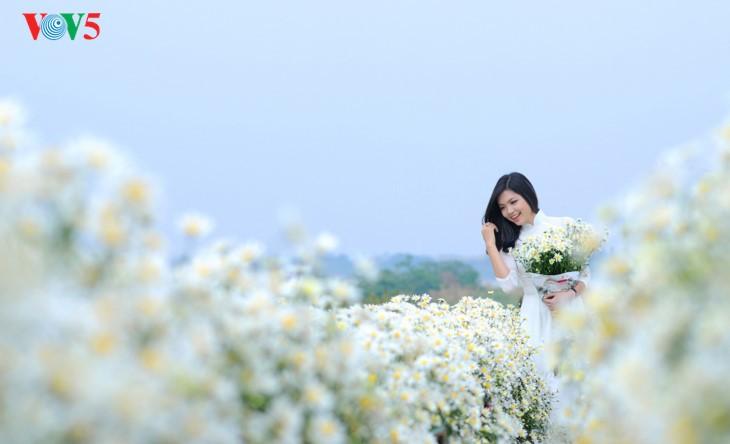 រដូវផ្កាគ្រីសាន (Chrysanthemum) Hoa mi (ហាកមី) រីកនៅទីក្រុងហាណូយ - ảnh 12