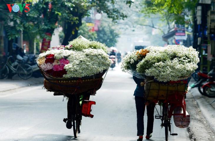 រដូវផ្កាគ្រីសាន (Chrysanthemum) Hoa mi (ហាកមី) រីកនៅទីក្រុងហាណូយ - ảnh 14