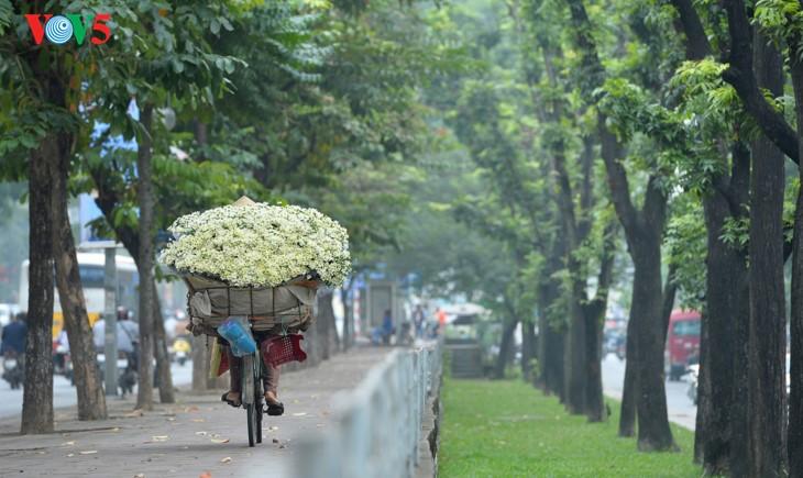 រដូវផ្កាគ្រីសាន (Chrysanthemum) Hoa mi (ហាកមី) រីកនៅទីក្រុងហាណូយ - ảnh 15