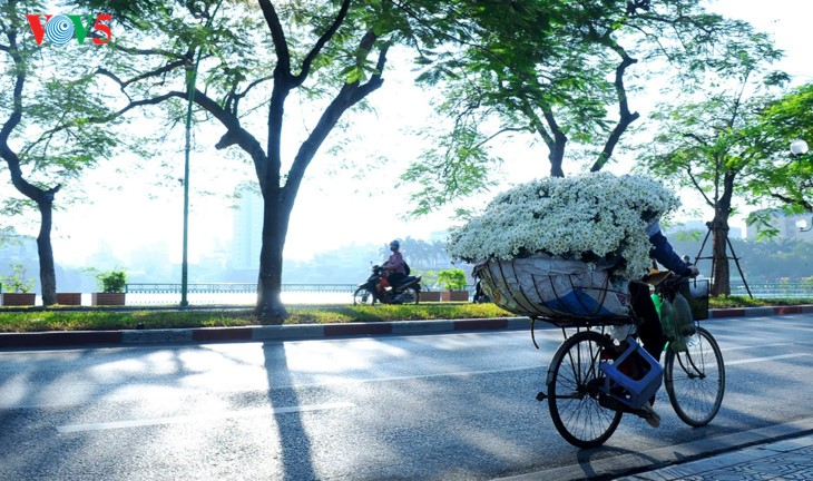 រដូវផ្កាគ្រីសាន (Chrysanthemum) Hoa mi (ហាកមី) រីកនៅទីក្រុងហាណូយ - ảnh 17