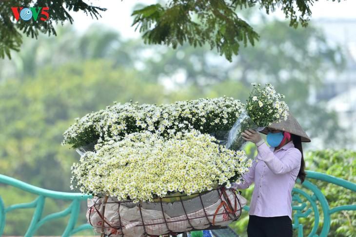 រដូវផ្កាគ្រីសាន (Chrysanthemum) Hoa mi (ហាកមី) រីកនៅទីក្រុងហាណូយ - ảnh 18