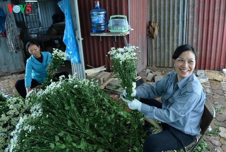 រដូវផ្កាគ្រីសាន (Chrysanthemum) Hoa mi (ហាកមី) រីកនៅទីក្រុងហាណូយ - ảnh 8