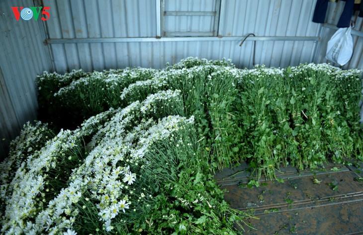 រដូវផ្កាគ្រីសាន (Chrysanthemum) Hoa mi (ហាកមី) រីកនៅទីក្រុងហាណូយ - ảnh 9
