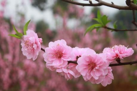 旅居加拿大越南人举行迎春活动 - ảnh 1