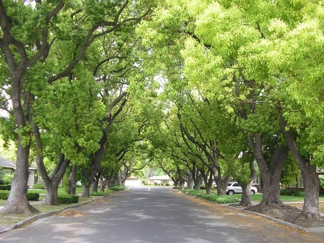 越南移动通讯公司赞助河内一千棵树 - ảnh 1