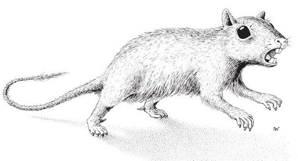 俄罗斯科学家发现远古哺乳动物新物种 - ảnh 1