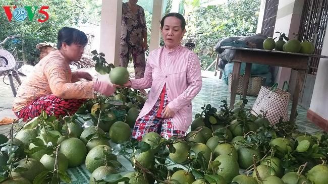 槟椥省实施新农村建设计划过程中的变化 - ảnh 2