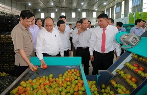 越南政府总理阮春福与林同省领导人举行工作座谈会 - ảnh 1