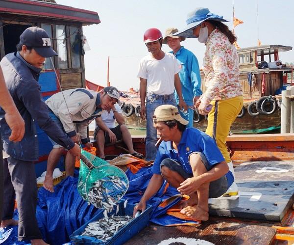 岘港市加强水产来源追溯 - ảnh 2